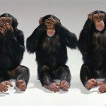 chimps see no wikileaks