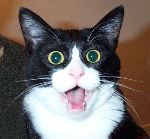 CAT-SHOCKED.jpeg
