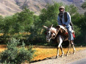 Man_on_donkey,_Afghanistan