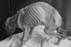 starving-dog